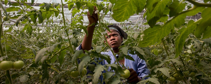 myAgro - Country Director, Mali Movemeback African opportunity cover image