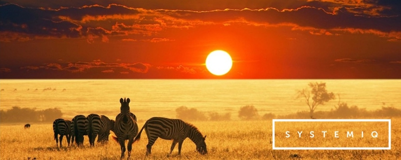 Systemiq - Strategy Consultant Movemeback African opportunity cover image