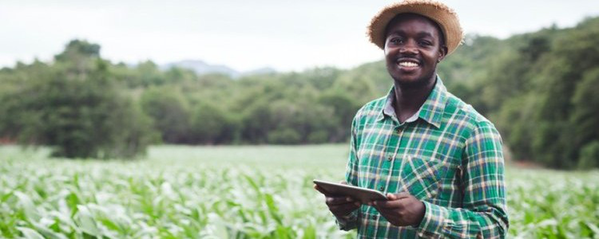 Wageningen Centre for Development Innovation - The African Food Fellowship Movemeback African initiative cover image